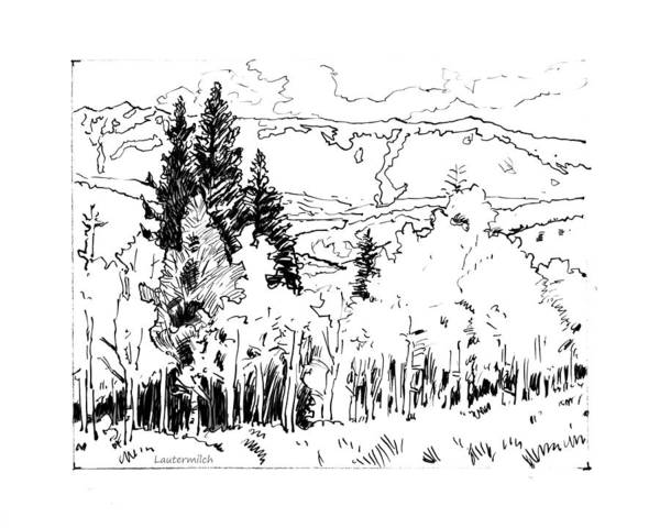 Aspens Art Print featuring the drawing Aspens Against the Evergreens by John Lautermilch