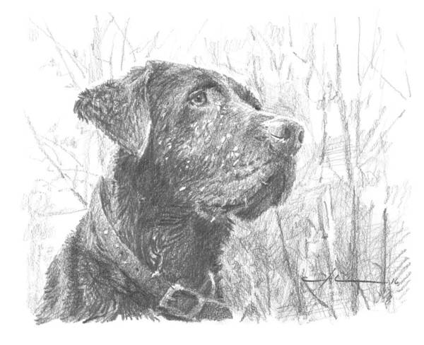Www.miketheuer.com Chocolate Labrador In Woods Drawing Art Print featuring the drawing Chocolate Labrador In Woods Drawing by Mike Theuer