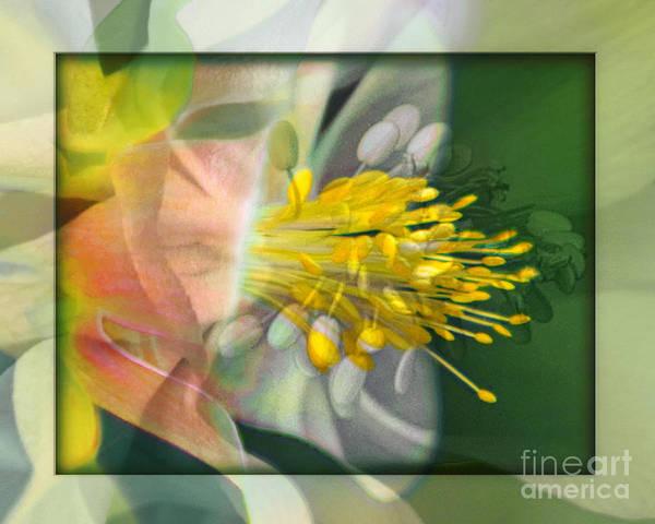 Flower Art Print featuring the photograph Columbine Burst by Chuck Brittenham