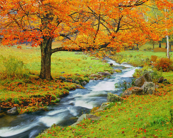 Scenics Art Print featuring the photograph Autumn In Vermont G by Ron thomas