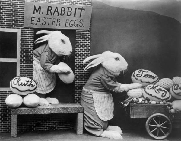 Stuffed Art Print featuring the photograph Bunny Business by Frees