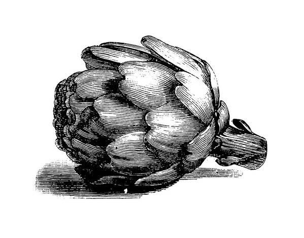 Italian Food Art Print featuring the digital art Globe Artichoke   Antique Culinary by Nicoolay