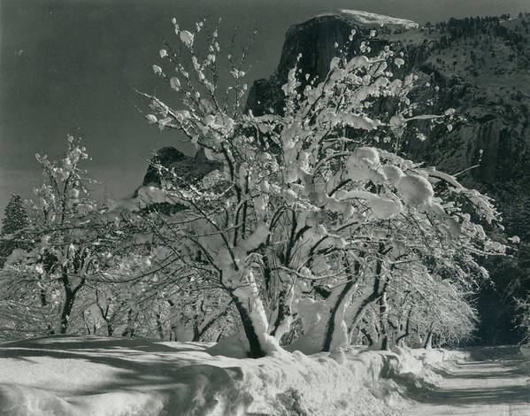 Social Issues Art Print featuring the photograph Half Dome, Apple Orchard, Yosemite by Archive Photos