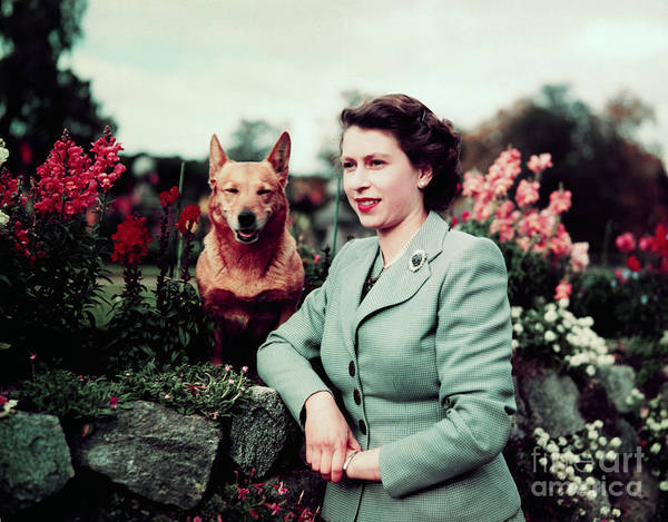 Pets Art Print featuring the photograph Queen Elizabeth In Garden With Dog by Bettmann