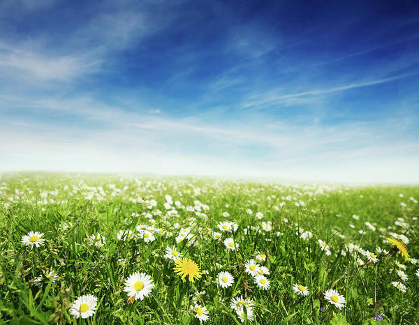 Scenics Art Print featuring the photograph Summer Meadow by Sykkel