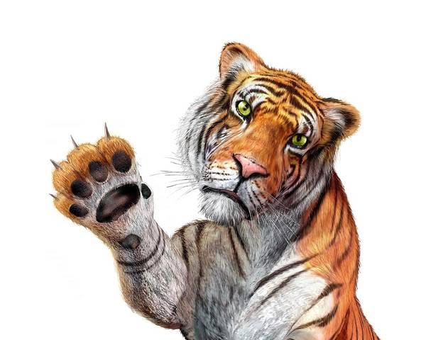 White Background Art Print featuring the digital art Tiger, Artwork by Leonello Calvetti