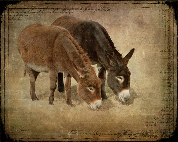 Donkeys Art Print featuring the digital art Daisy and Wilma by Linda Lee Hall
