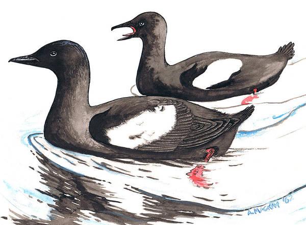 Black Guillemot Art Print featuring the mixed media Black Guillemot by Art MacKay