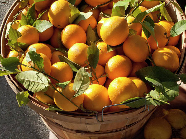 Orange Art Print featuring the photograph Basket Of Fresh Picked Oranges by Bill Boch