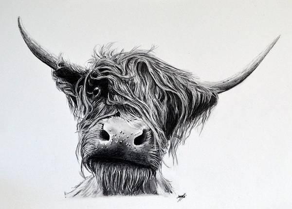 Bo Ghaidhealach An t Eilean Muileach Highland Cow Isle Of Mull by Aaron de la Haye