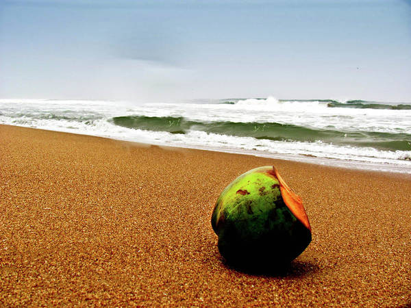 Tranquility Art Print featuring the photograph Coconut On Sandy Beach With Waves And by Amlan Mathur