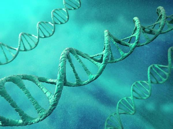 Color Image Art Print featuring the digital art Dna Molecules, Artwork by Science Photo Library - Andrzej Wojcicki