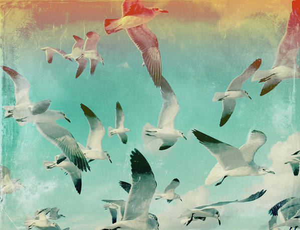 Animal Themes Art Print featuring the photograph Flock Of Seagulls, Miami Beach by Michael Sugrue