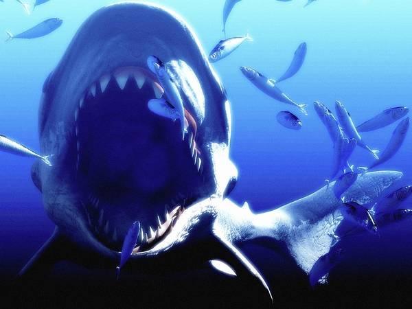 Carcharocles Megalodon Art Print featuring the photograph Megalodon Prehistoric Shark by Christian Darkin