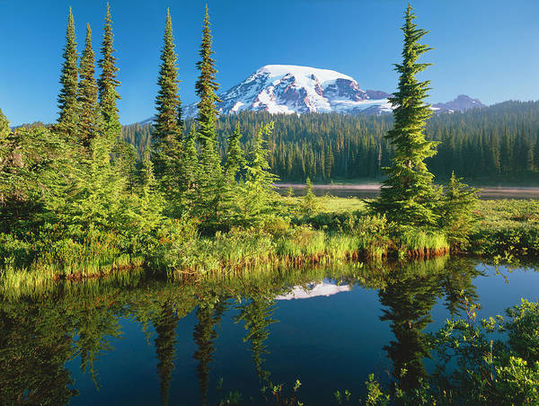 Water's Edge Art Print featuring the photograph Mount Rainier National Park by Ron thomas
