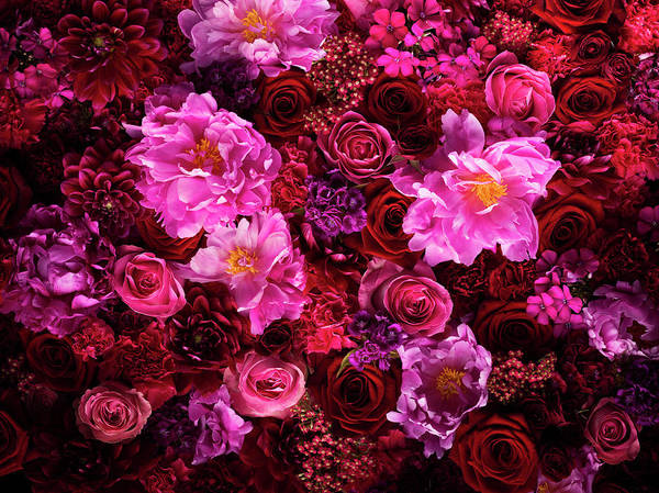 Tranquility Art Print featuring the photograph Red And Pink Cut Flowers, Close Up by Jonathan Knowles