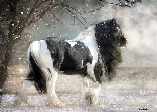 Horse Photographs Art Print featuring the photograph Solitary by Fran J Scott