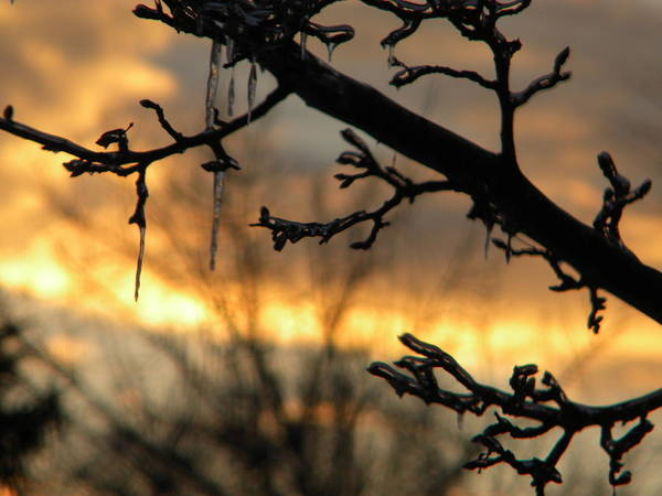 Sunset Art Print featuring the photograph Branches in January by Helen ONeal