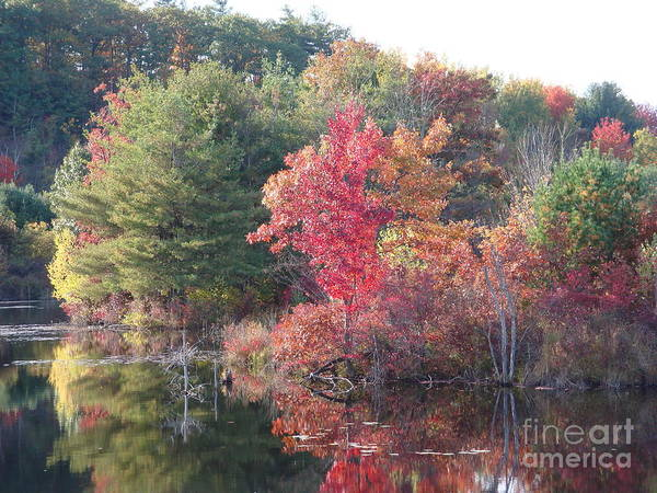 Autum Leaves Art Print featuring the photograph An Autum day by Robyn Leakey