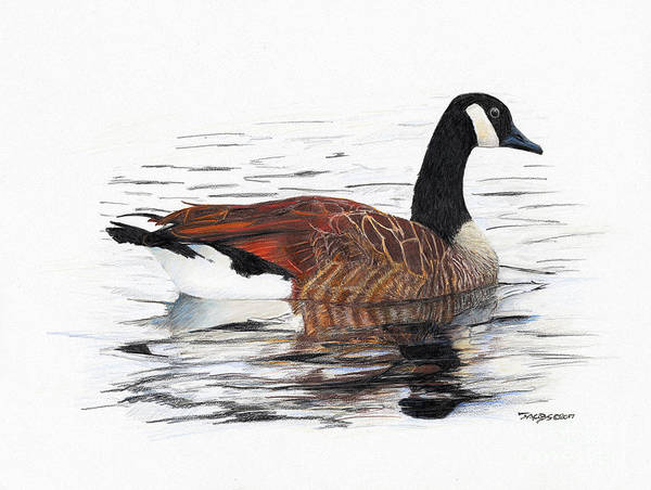 Goose Art Print featuring the drawing Annie Belle by Kevin Scott Jacobs