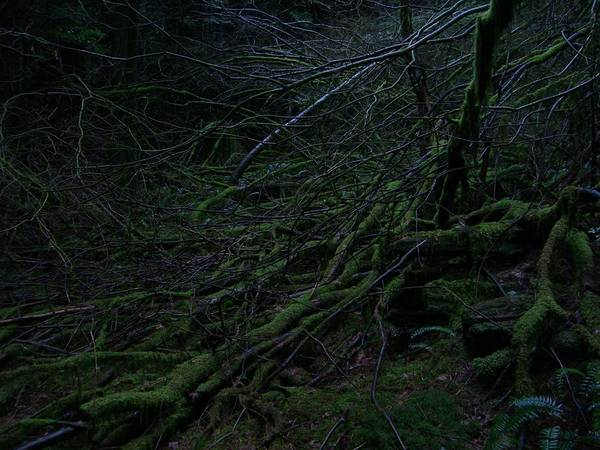 Arnor Art Print featuring the photograph Arboreal Forest by Jim Thomson