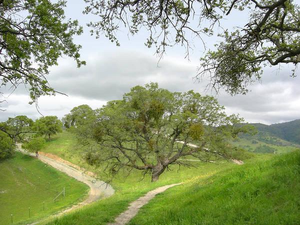 Landscape Art Print featuring the photograph East Ridge Trail - Spring by Karen W Meyer