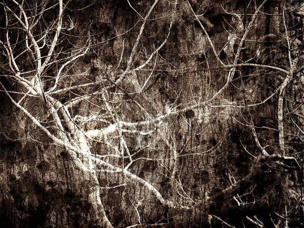 Tree Art Print featuring the photograph Endless by Gaby Swanson