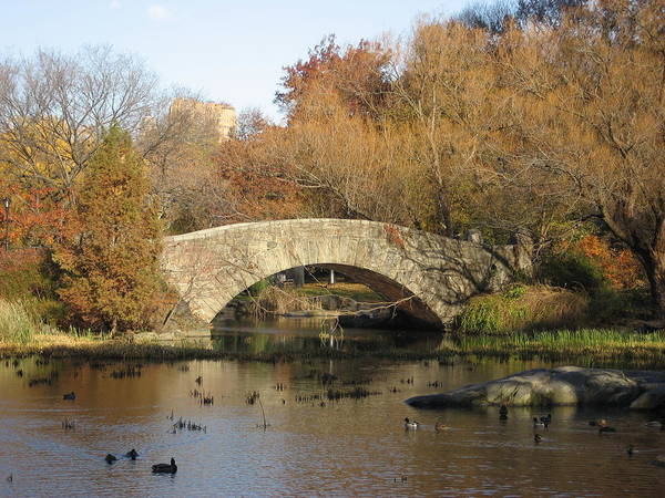 Bridge Art Print featuring the photograph Fall in Central Park by Jennifer Sweet