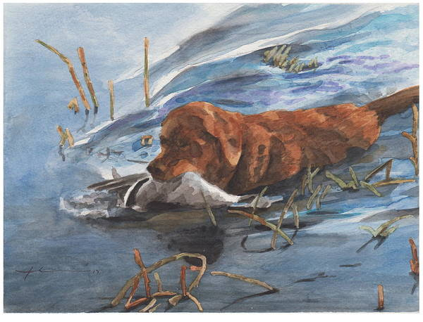 Www.miketheuer.com Golden Retriever With Duck Watercolor Portrait Art Print featuring the drawing Golden Retriever With Duck by Mike Theuer