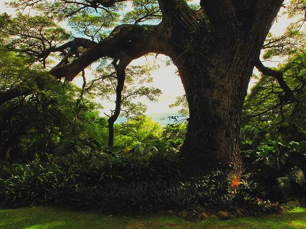 Tropical Art Print featuring the photograph Green Giant by Ian MacDonald
