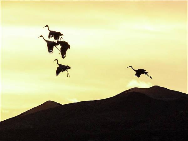 Bosque De Apache Art Print featuring the photograph Hang Time by Marla Craven