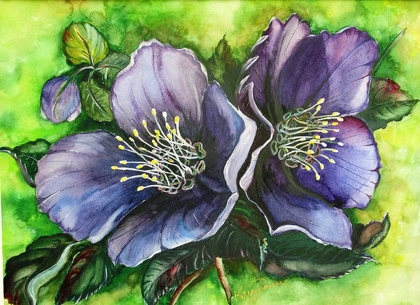 Flower Painting Botanical Painting Original W/c Painting Helleborous Painting Art Print featuring the painting Helleborous Blue Lady by Karin Dawn Kelshall- Best