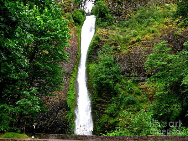 Waterfall Art Print featuring the photograph Horsetail Falls by PJ Cloud