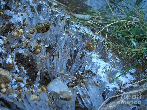 Ice Art Print featuring the photograph Ice Shards by Jim Thomson