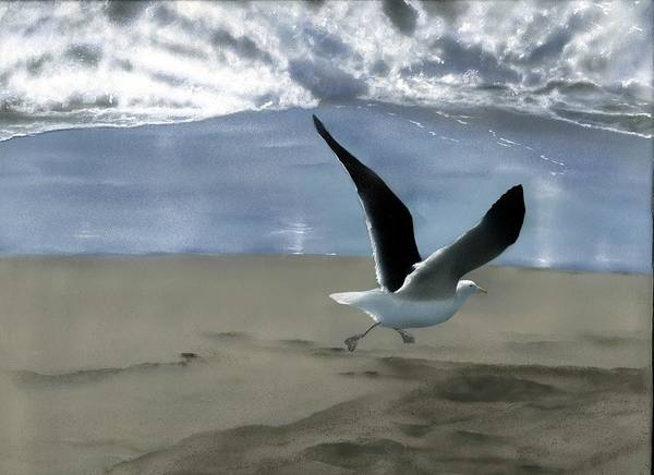 Gull Art Print featuring the painting Running Gull by Charles Parks