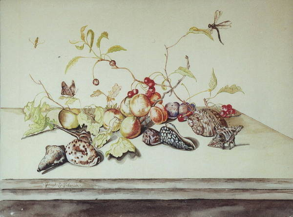 Still Life Fruit Shells Insects Art Print featuring the painting Sea Shells by Joseph Valencia