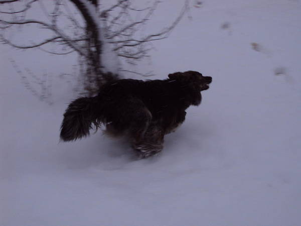 Dog Art Print featuring the photograph The Chase On Snow by David Du Hempsey