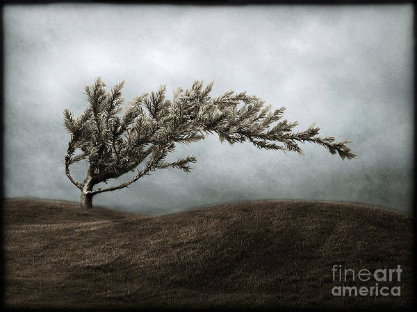 Bend Art Print featuring the photograph We Break and We Bend and We Turn Ourselves Inside Out by Dana DiPasquale