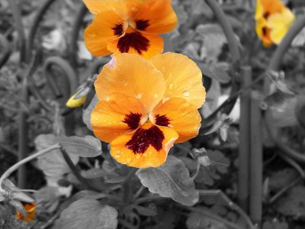 Flower Art Print featuring the photograph Yellow by Jessica Burgett