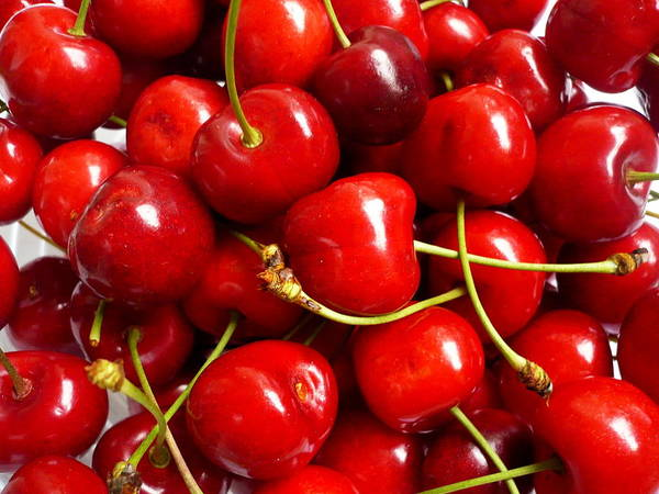 Cherry Art Print featuring the photograph Fresh Red Cherries by Vienna Mornings