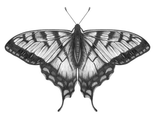 Art Art Print featuring the digital art Graphite Illustration Of A Beautiful by Ranplett