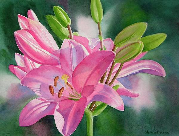 Watercolor Lily Art Print featuring the painting Pink Lily with Buds by Sharon Freeman