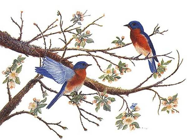 Bluebirds Art Print featuring the painting Bluebirds And Apple Blossoms by Ben Kiger