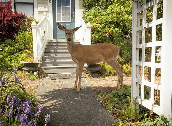 Deer Art Print featuring the photograph Curious by Jim Painter
