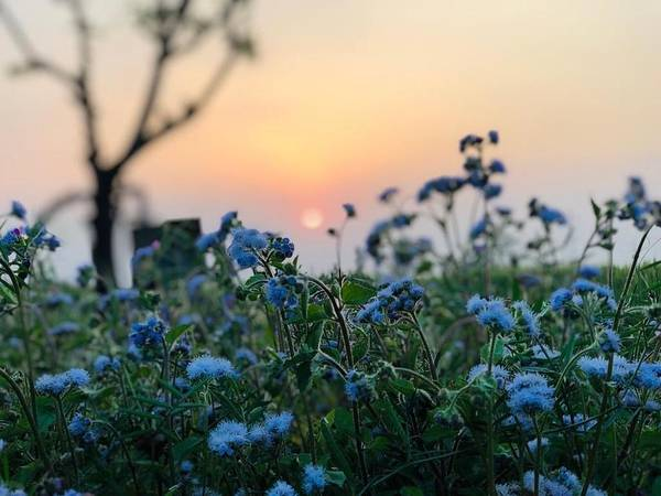 Flowers Art Print featuring the photograph Sunset Behind Flowers by Prashant Dalal
