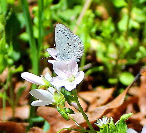 Butterfly Art Print featuring the photograph Butterfly Flower by Candice Trimble