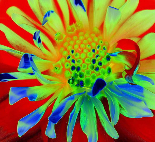 Diane Berry Art Print featuring the painting Bright Flower by Diane E Berry