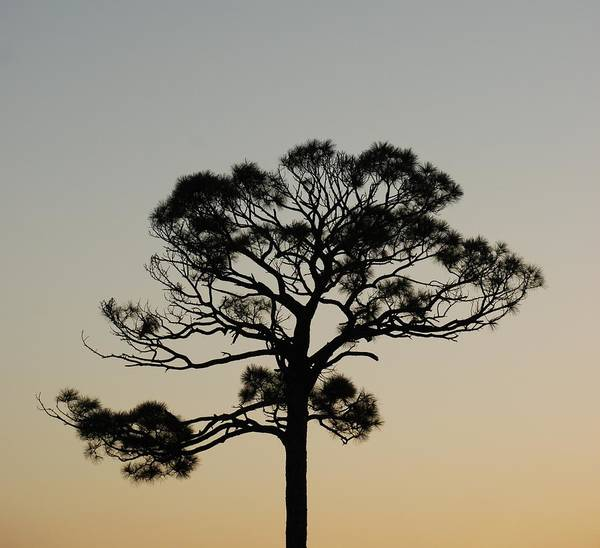 Tree Art Print featuring the photograph Trees In Sunset by Rob Hans