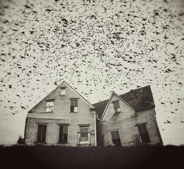 Spooky Art Print featuring the photograph Home Of Murmuration by Shaunl