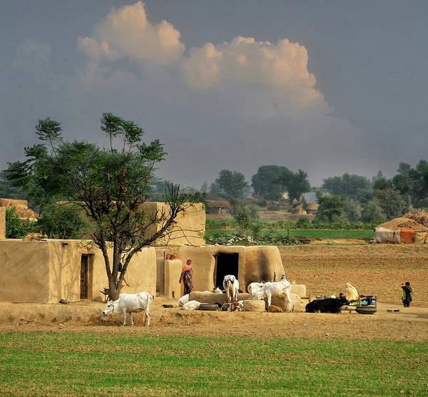 Grass Art Print featuring the photograph The Village Of Punjab by Nadeem Khawar